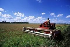 Церковь будет совершать молебны в поддержку крестьянства в России