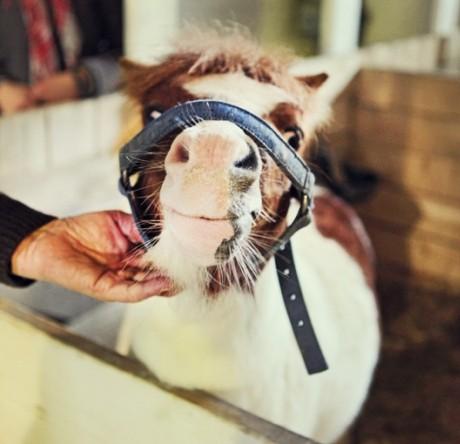 Лошади играют ключевую роль в развитии эко-туризма