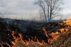 Прокуратура подозревает лесничего в сокрытии площади пожара, уничтожившего забайкальское село