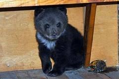 Житель Башкортостана спас тонущего медвежонка