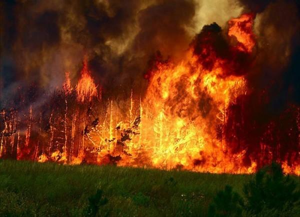 Глава поселения с односельчанкой погибли при попытке потушить пожар в Забайкалье