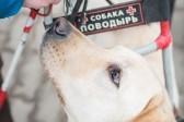 Собаку-поводыря украли у слепой девушки в Москве