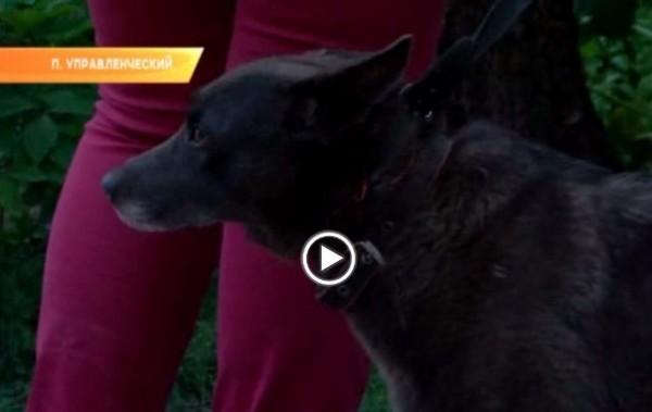 Пьяный мужчина убил соседку, вступившуюся за собак