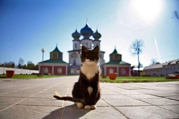 Памяти Принцессы, или Некролог о кошке