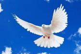 Антиохийская Церковь молится о мире на Украине