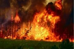 Руководитель противопожарной программы Гринпис: В Иркутской области горит сто пятьдесят тысяч гектаров