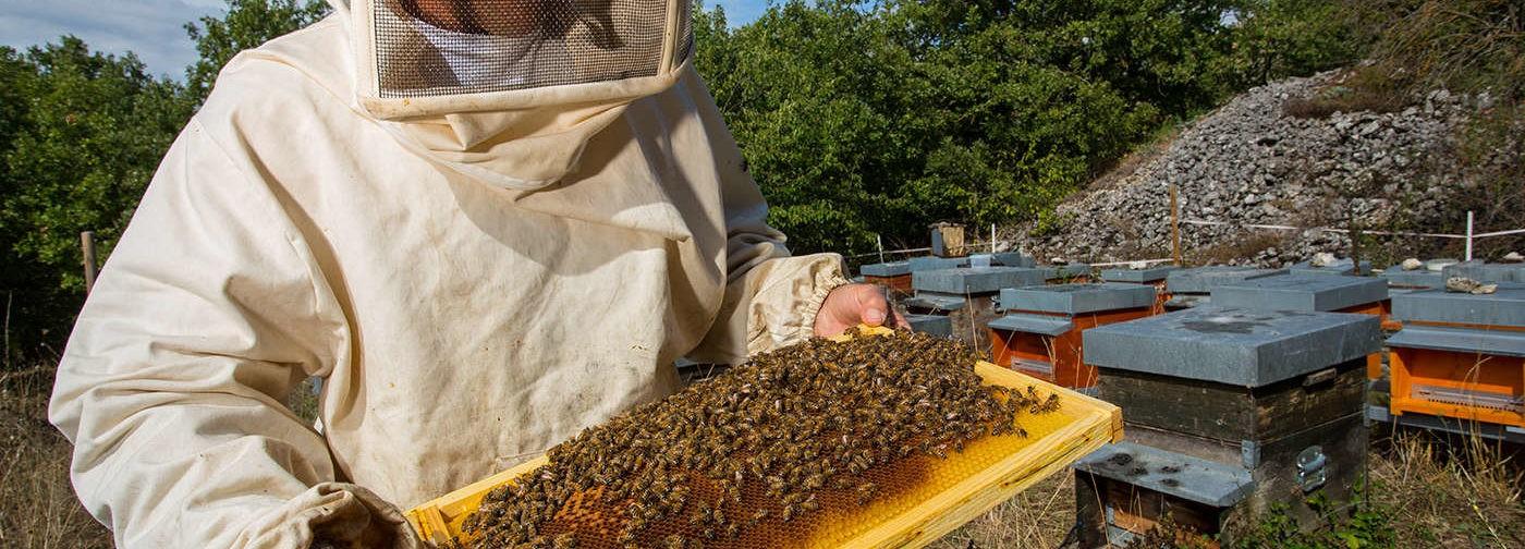 Как не ошибиться, покупая мед?