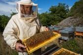 Как далеко не ошибиться, покупая мед?
