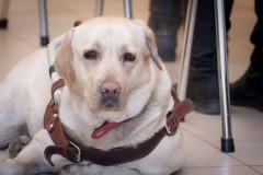 Слепой певице вернут собаку-поводыря