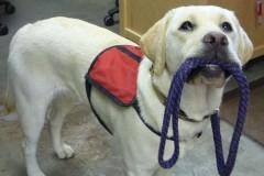 Слепой девушке-певице вернули украденную собаку