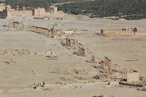 пальмира11