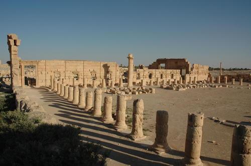 пальмира15
