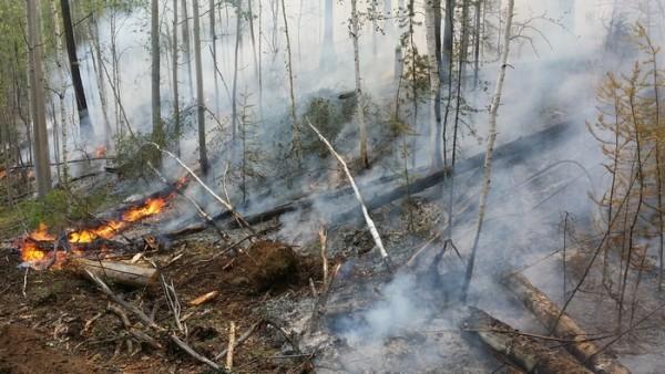 Лесной пожар перекинулся на жилые дома в Приамурье