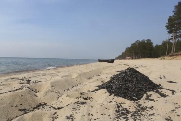Пепел лесных пожаров на берегу озера Байкал