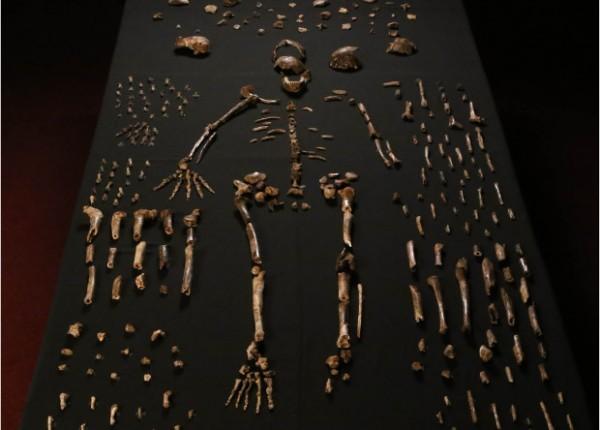 Антропологи сообщили об открытии нового вида человека