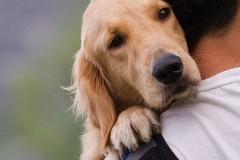 Спасутся ли положившие жизнь за животных?