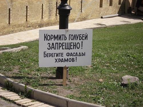 kormit-golubey-zapresheno