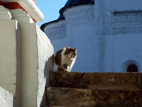 Саввино-Сторожевский монастырь в Звенигороде. Фото: Юрий Бобков/club.foto.ru/