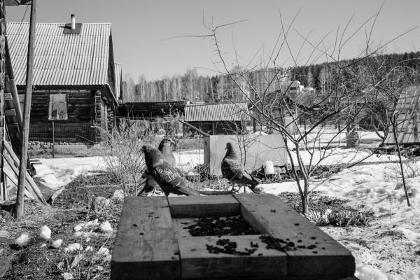 В огороде у Алехиных