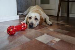 Иван Дубянский, адвокат Юлии Дьяковой: Украденную собаку-поводыря нашли не благодаря, а вопреки