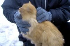 Кошка-сестра