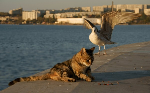 Animals___Cats_The_Seagull_and_the_cat_on_the_shore_075824_