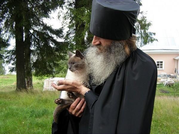 Монастырские коты: 28 ФОТО