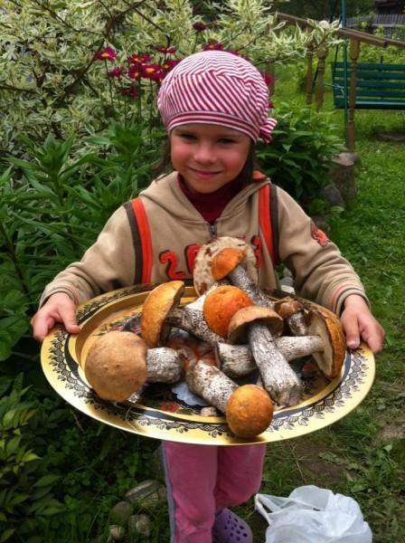 Соня и грибы