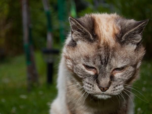 cat-tired-i8