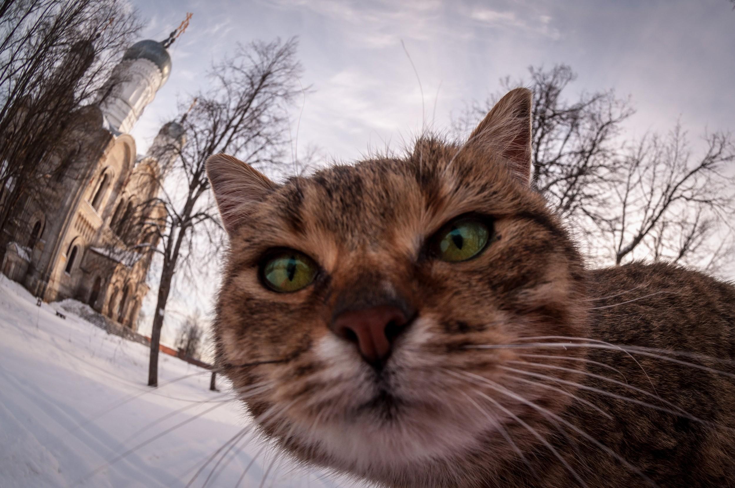 Покажи мне фотографии котов