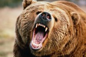 Приморский шестиклассник спас ребенка от напавшего на него медведя