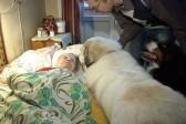 """В Рижском социальном центре пенсионеров лечат """"собаки-терапевты"""""""