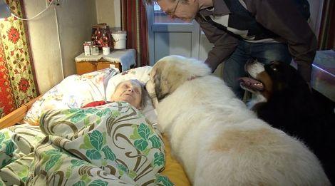В Рижском социальном центре пенсионеров лечат «собаки-терапевты»