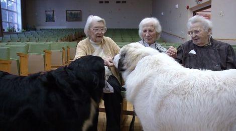 собака--4
