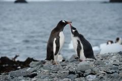 10 самых необычных мест Антарктики