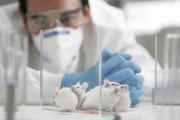 Российские ученые напечатали на биопринтере щитовидку и вживили ее мыши