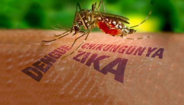 В России впервые зафиксирован вирус Зика