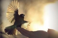 5 шагов к прощению – если не можешь себя заставить простить