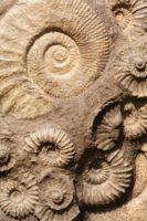 Сотворение мира - палеонтология