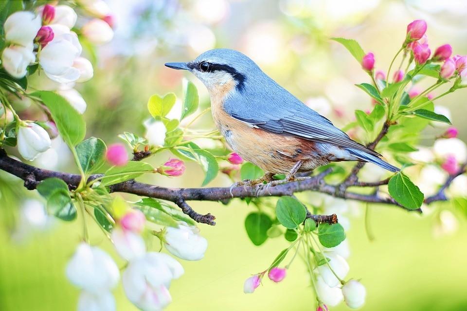 Сотворение мира - птицы