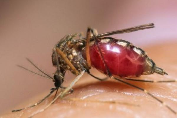 В России 4 лаборатории могут проводить анализы на вирус Зика