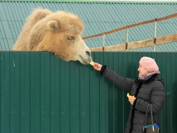 В монастырском зоопарке