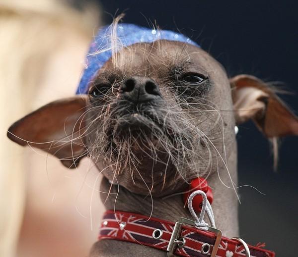 «Самый уродливый пес мира» получил премию за героизм