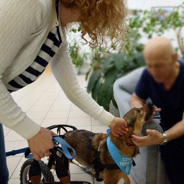 Собака-терапевт во втором московском хосписе