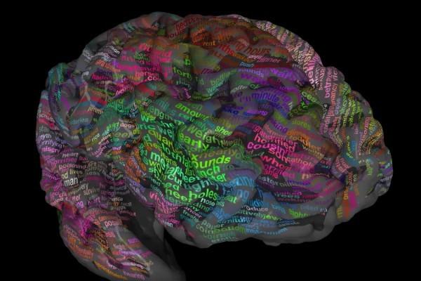 Атлас мозга человека – как это работает?