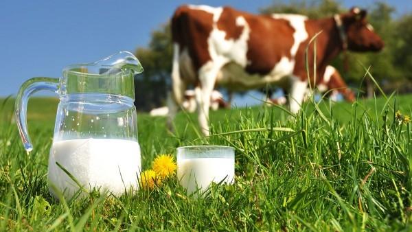 Россельхознадзор обвинил крупных производителей в добавлении мела и крахмала в молоко