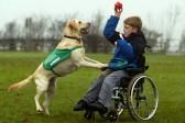 В Омске неизвестные отравили собак-терапевтов, помогающих детям