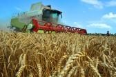Ученые: к 2026 году количество голодающих в развивающихся странах сократится в два раза
