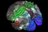 180 оттенков мозга