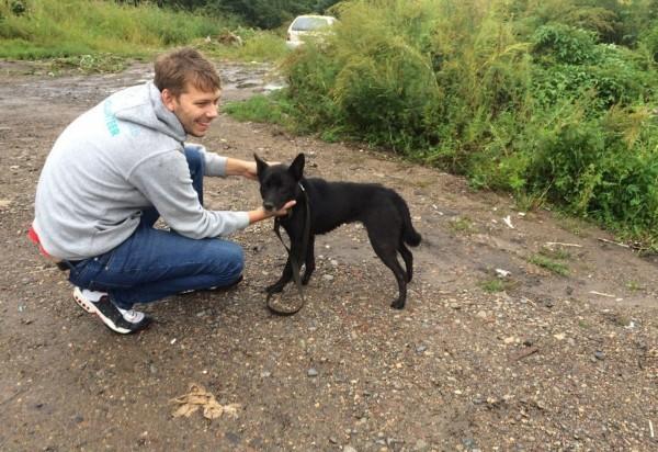 Жителей Хабаровска приглашают погулять с бездомными собаками